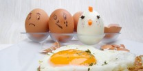 5 Foods More Protein Rich Than Eggs